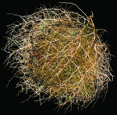 Tumbleweed #3 by Mikel Covey. Archival pigment print at J GO Gallery